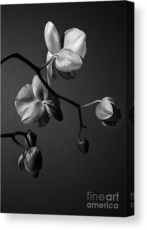Orchid Canvas Print featuring the photograph Scotopic Vision 3 - Orchid by Pete Hellmann