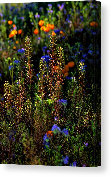 Flowers Canvas Print featuring the photograph Shimmers by Randy Oberg