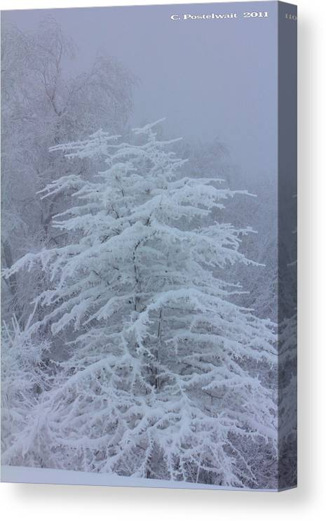 Snow Canvas Print featuring the photograph Snow Covered Tree in the Fog by Carolyn Postelwait