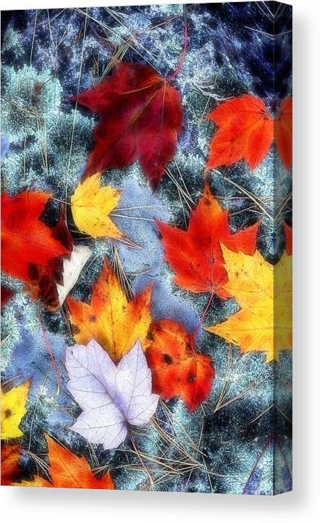 Maple Leaves Canvas Print featuring the photograph Under Foot by Bill Morgenstern
