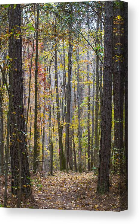 Georgia Canvas Print featuring the photograph Walk In The Woods by Keith May