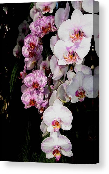 Orchid Canvas Print featuring the photograph Waterfall by Betnoy Smith