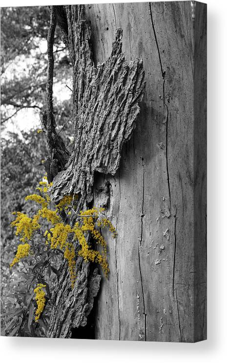 Bark Canvas Print featuring the photograph Yellow Tufts by Dylan Punke