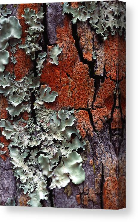 Built Structure Canvas Print featuring the photograph Lichen On Tree Bark by John Foxx