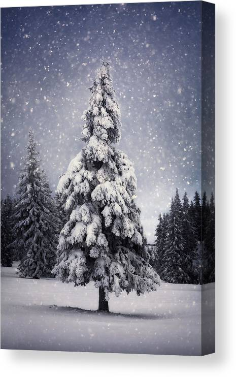 Scenics Canvas Print featuring the photograph Winter Tree by Borchee