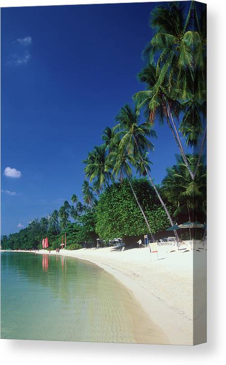 Water's Edge Canvas Print featuring the photograph Palm Trees At Sandy Chaweng Beach by Otto Stadler