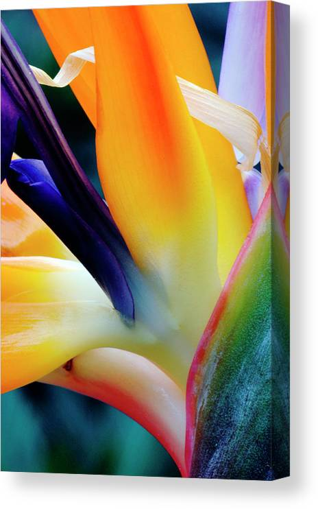 Banana Tree Canvas Print featuring the photograph A Close-up Of A Flower Of A Bird Of by Eromaze