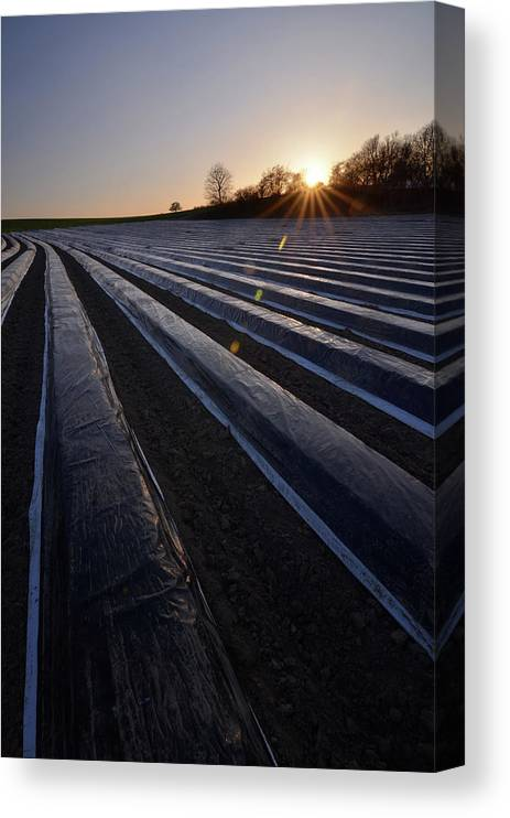 Tranquility Canvas Print featuring the photograph Asparagus Field by Andy Brandl