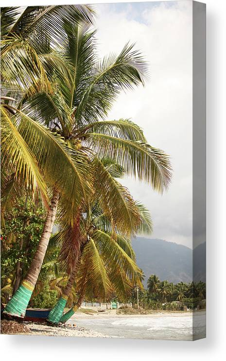 Tropical Tree Canvas Print featuring the photograph Beach In Haiti by 1001nights