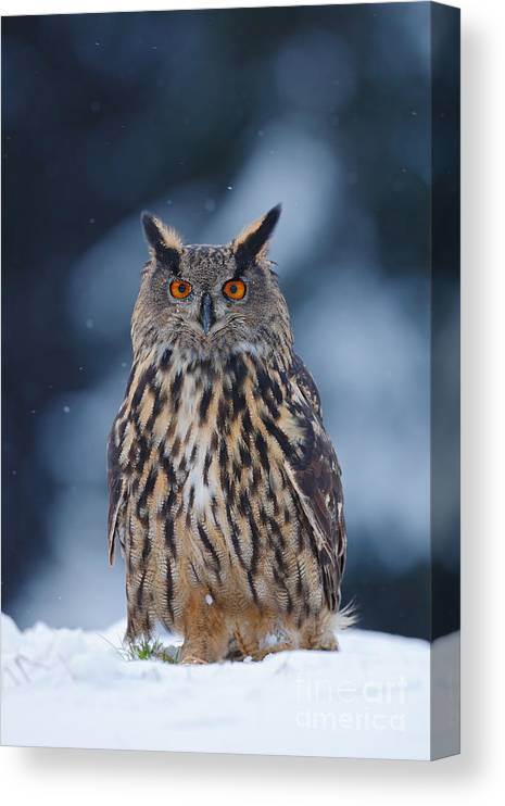 Big Canvas Print featuring the photograph Big Eurasian Eagle Owl With Snowflakes by Ondrej Prosicky