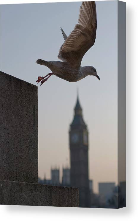 Clock Tower Canvas Print featuring the photograph Bird Takeoff by Photograph © Jon Cartwright