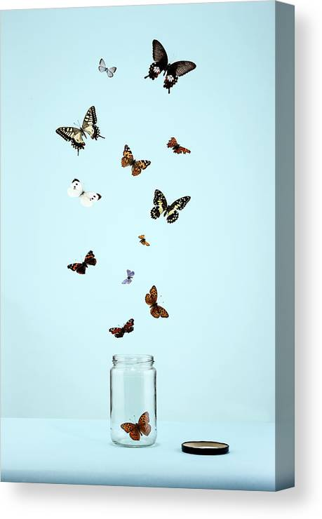 Animal Themes Canvas Print featuring the photograph Butterflies Escaping From Jar by Martin Poole