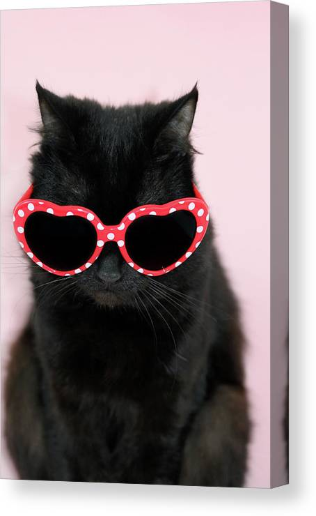 Pets Canvas Print featuring the photograph Cool Cat Wearing Sunglasses by Kelly Bowden
