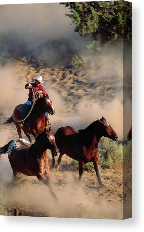Horse Canvas Print featuring the photograph Cowboy Roping Horses by John Luke