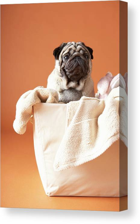 Pets Canvas Print featuring the photograph Dog In Basket by Chris Amaral