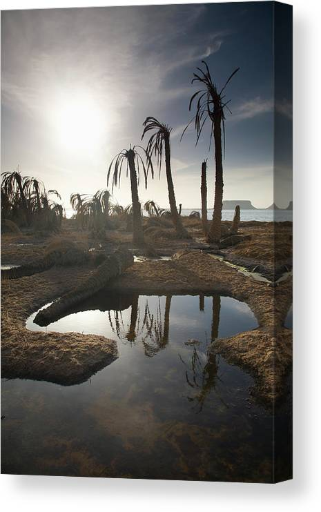 Scenics Canvas Print featuring the photograph Dried Up Palm Trees And Salt Water On by Sean White / Design Pics