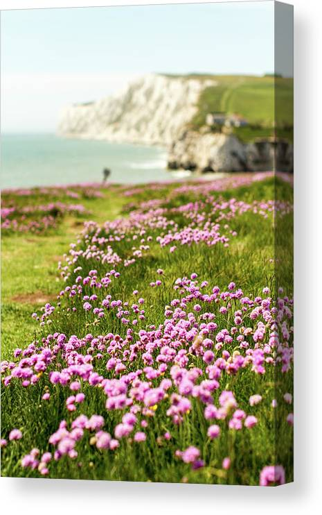 Scenics Canvas Print featuring the photograph Pink Coastal Path by S0ulsurfing - Jason Swain