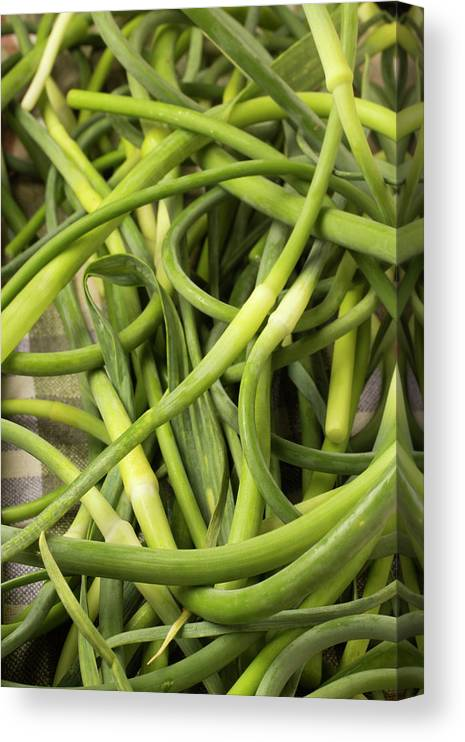 Season Canvas Print featuring the photograph Raw Garlic Scapes by Brian Yarvin