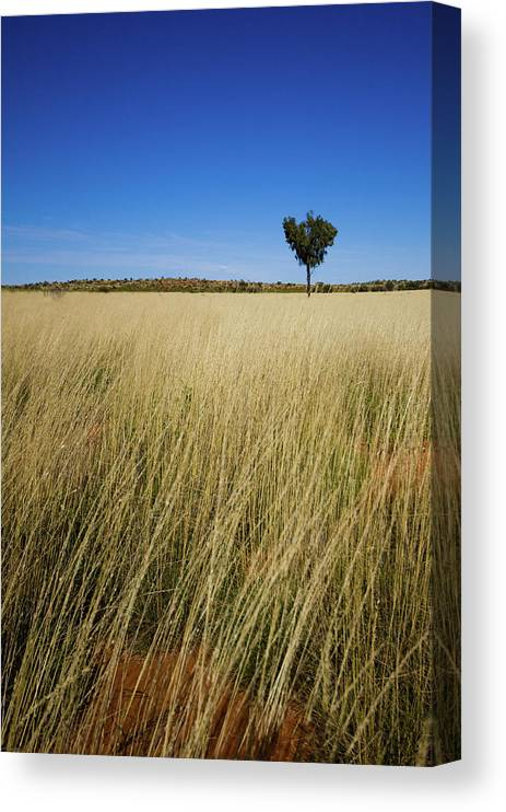 Scenics Canvas Print featuring the photograph Small Single Tree In Field by Universal Stopping Point Photography