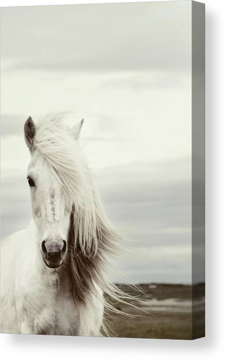 Horse Canvas Print featuring the photograph ísold by Gigja Einarsdottir