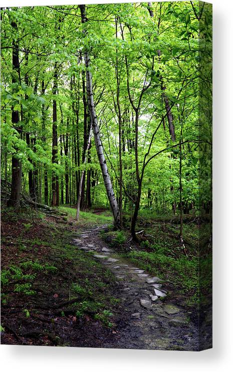 Nature Canvas Print featuring the photograph Stone Path with Birch by Tom Romeo