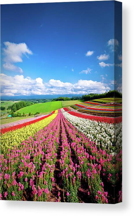 Tranquility Canvas Print featuring the photograph Summer Of Furano by Grace's Photo