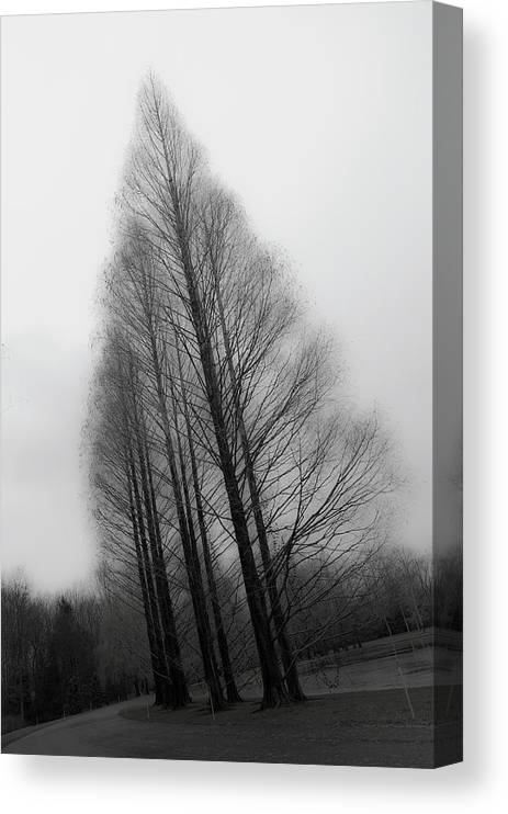 Tranquility Canvas Print featuring the photograph Trees In Winter Without Leaves by Marie Hickman