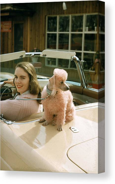 Pets Canvas Print featuring the photograph Woman & Her Poodle by Nina Leen