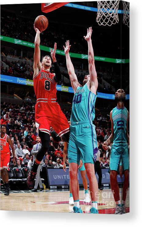 Chicago Bulls Canvas Print featuring the photograph Zach Lavine by Jeff Haynes