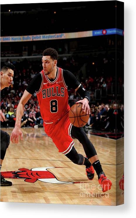 Chicago Bulls Canvas Print featuring the photograph Zach Lavine by Gary Dineen