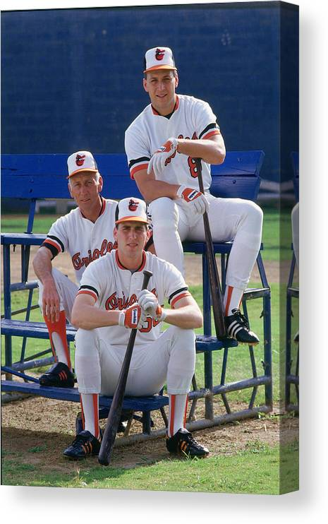 1980-1989 Canvas Print featuring the photograph Cal Ripken by Ronald C. Modra/sports Imagery