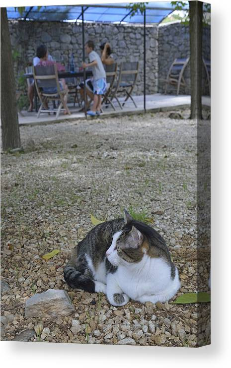 Pets Canvas Print featuring the photograph Cat lying in garden by Sami Sarkis