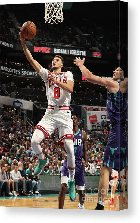 Chicago Bulls Canvas Print featuring the photograph Zach Lavine by Kent Smith