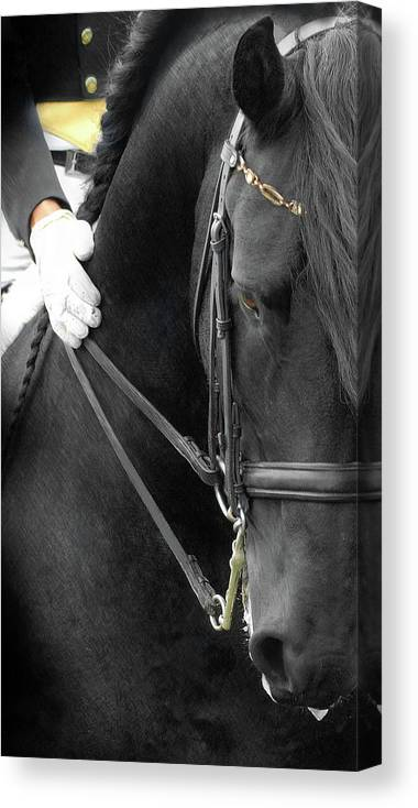 Friesian Competition Canvas Print featuring the photograph Good Boy by Fran J Scott