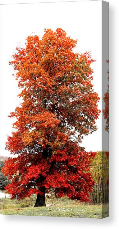 Autumn Canvas Print featuring the photograph Webster County Foliage by Carolyn Postelwait