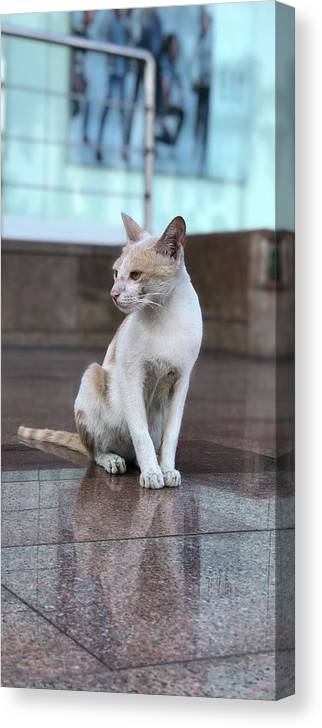 Wallpaper Canvas Print featuring the photograph Cat Sitting On Marble Floor by Prashant Dalal