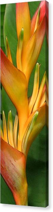 Heliconia Canvas Print featuring the photograph Hawaii Dreaming 2 by James Temple