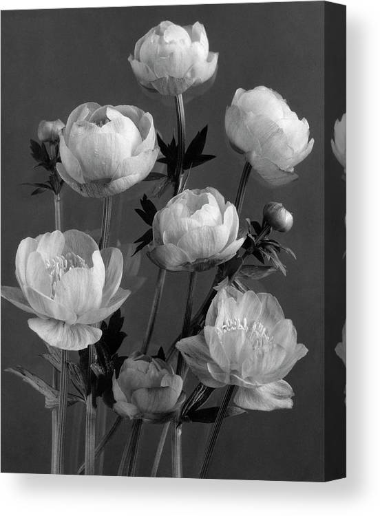 Flowers Canvas Print featuring the photograph Still Life Of Flowers by J. Horace McFarland