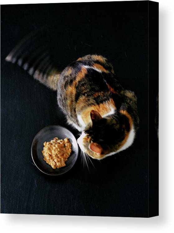 Cat Canvas Print featuring the photograph A Cat Beside A Dish Of Cat Food by Romulo Yanes