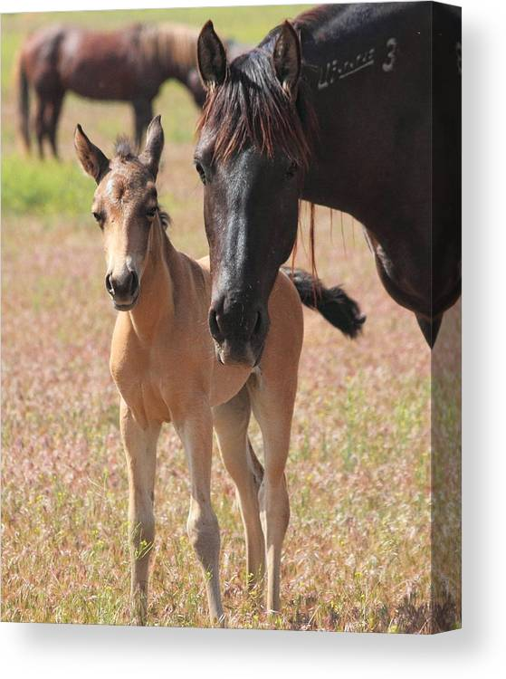 Horse Canvas Print featuring the photograph Mother's Love by Gene Praag