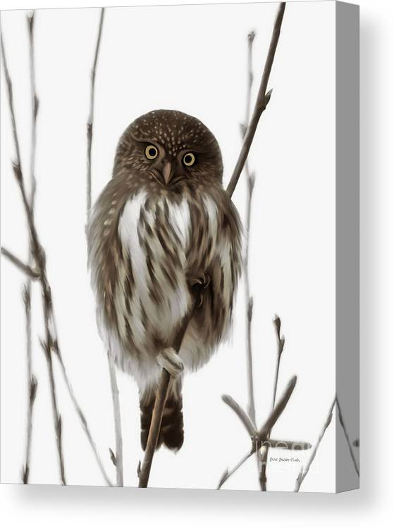 Northern Pygmy Owl Canvas Print featuring the painting Northern Pygmy Owl - Little One by Beve Brown-Clark Photography