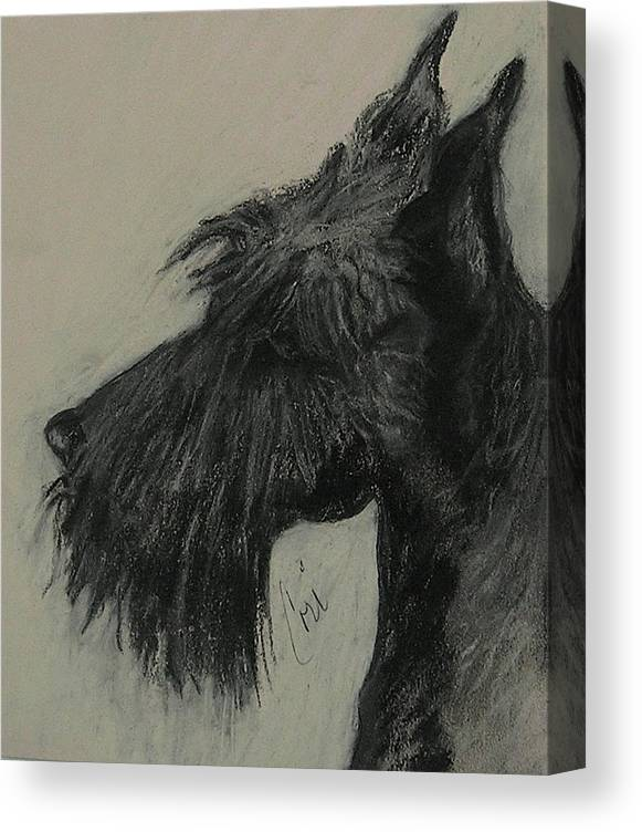 Drawing Canvas Print featuring the drawing Scottish Delight by Cori Solomon