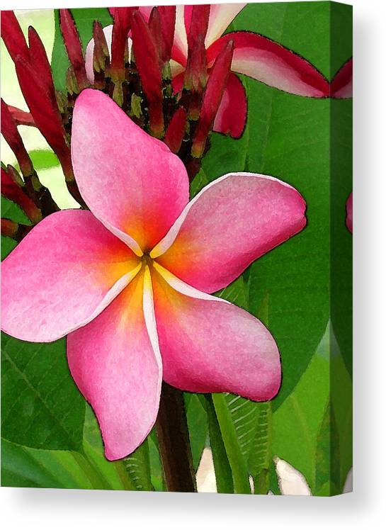 Plumeria Canvas Print featuring the photograph Sweet Fragrance by James Temple