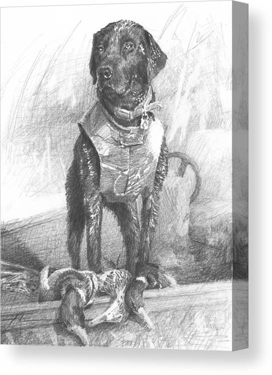 <a Href=http://miketheuer.com Target =_blank>www.miketheuer.com</a> Black Labrador Duck Hunting Pencil Portrait Canvas Print featuring the drawing Black Labrador Duck Hunting Pencil Portrait by Mike Theuer