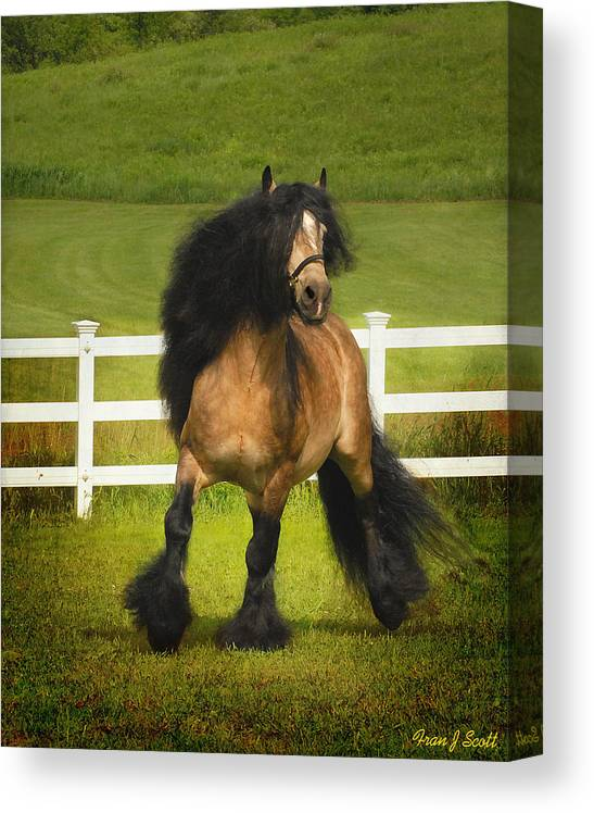 Horses Canvas Print featuring the photograph Falcon C2 by Fran J Scott