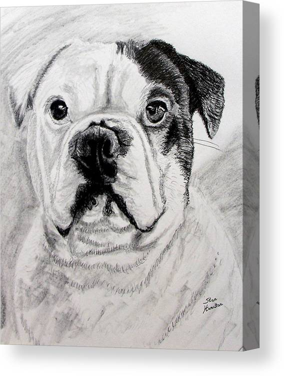 French Canvas Print featuring the drawing French Bull Dog by Stan Hamilton