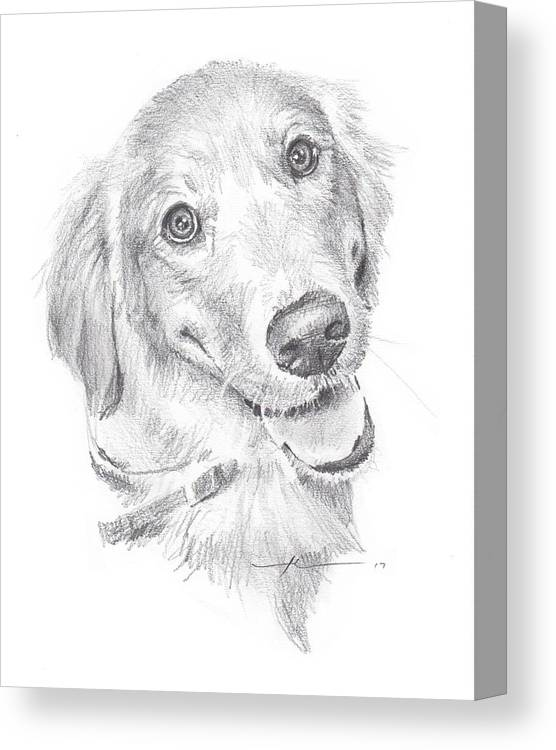 Www.miketheuer.com Canvas Print featuring the drawing Golden Retriever by Mike Theuer