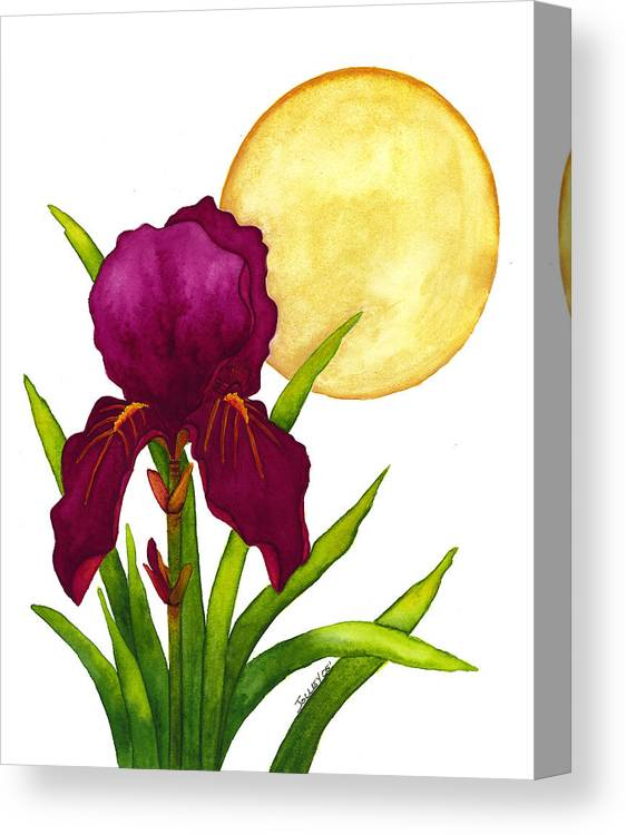 Iris Canvas Print featuring the painting Purple Iris by Stephanie Jolley