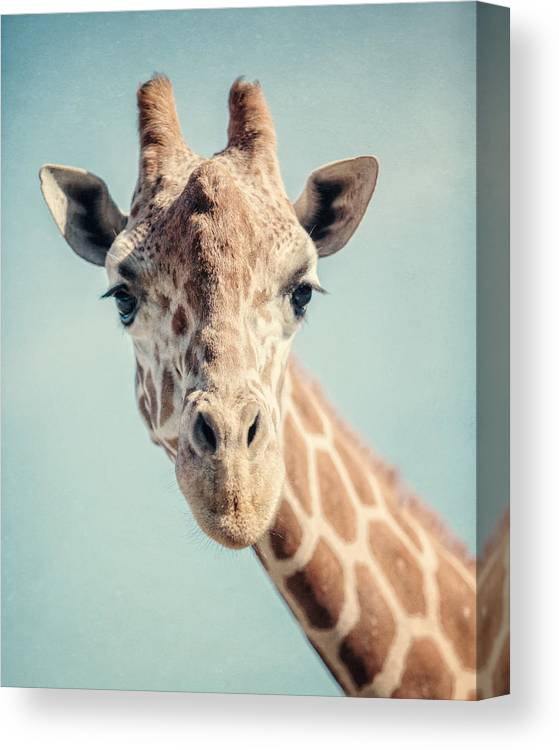 Giraffe Canvas Print featuring the photograph The Baby Giraffe by Lisa R