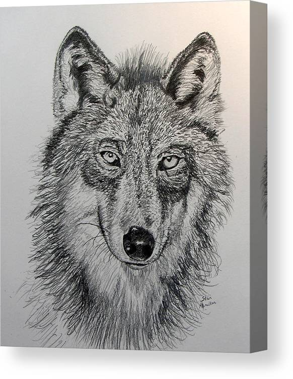 Original Drawing Canvas Print featuring the drawing Timber Wolf by Stan Hamilton